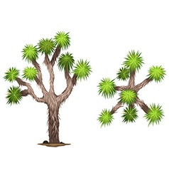 A yucca brevifolia vector