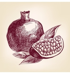fruit pomegranate hand drawn llustration vector image