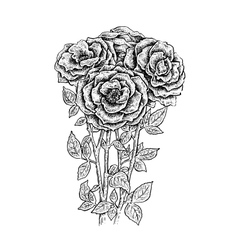Beautiful ink hand drawn black and white roses vector
