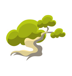 Green tree with white trunk bonsai miniature vector