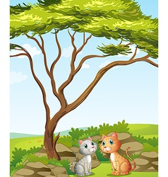 Two cats in the forest vector