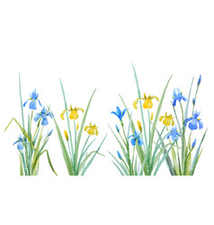 Watercolor iris flowers composition vector