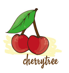 cherry is hand-painted vector image vector image