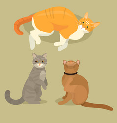 Different cat cute kitty pet cartoon cute animal vector