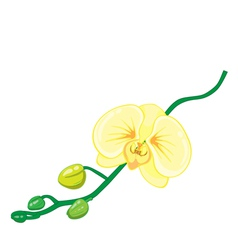 orchids flower on white background vector image vector image