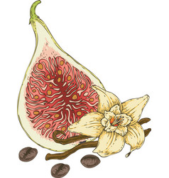 Vanilla flower fig and coffee beans vector