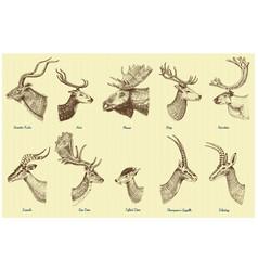 Big set of horn antlers animals moose or elk with vector