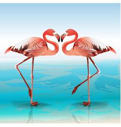 two flamingos vector image