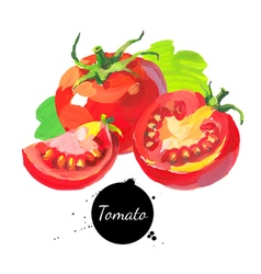 Tomato set hand drawn sketch watercolor acrylic vector