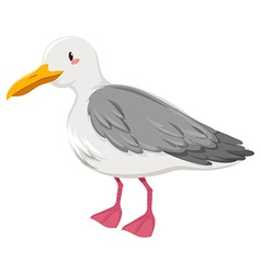 Seagull with gray and white feather vector