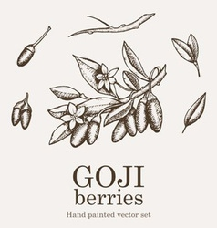 Goji berry vector