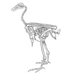 Condor skeleton vintage vector