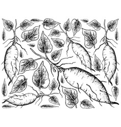 Hand drawn of sweet potato on white background vector