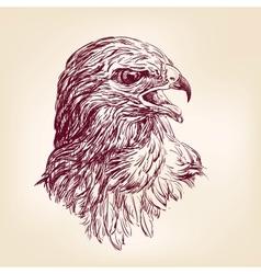 Hawk - vector