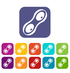 Peanut pods icons set flat vector