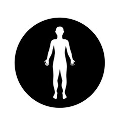 Man anatomy silhouette isolated icon vector