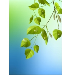 realistic branch of birch vector image vector image