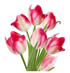 Bouquet of tulips isolated on white eps 10 vector