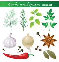 highly detailed herbs and spices icons set vector image
