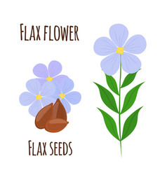 flax flower seeds vegetarian food natural linen vector image