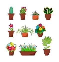 House plants and flowers for interior decoration vector image vector image