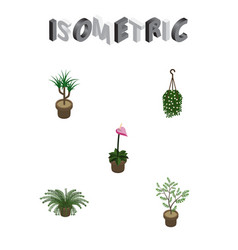 Isometric flower set of blossom plant grower and vector