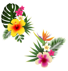 tropical flower set vector image
