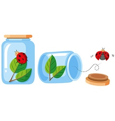 Ladybugs in the bottle and out the bottle vector