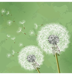 Vintage floral background with dandelion vector image