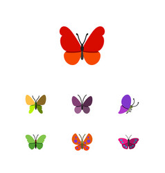 Flat monarch set of violet wing monarch moth and vector