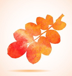Orange watercolor dog-rose leaf vector
