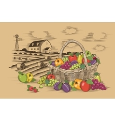 Fruits Basket And Farm vector image