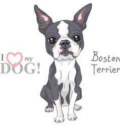 sketch dog Boston Terrier breed serious vector image
