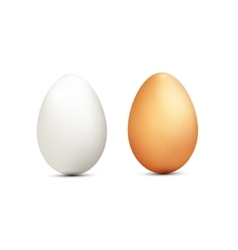 Two eggs isolated on white background vector