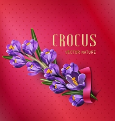 Greeting card with blue crocuses red ribbon vector