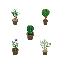Isometric flower set of houseplant tree flower vector