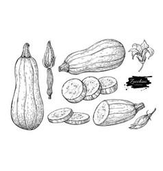 Zucchini hand drawn set vector