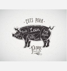 Graphic silhouette of a pig with the line of vector