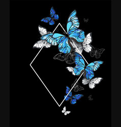 rhombus butterfly morpho vector image vector image