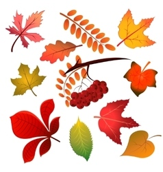 Autumn leaves on white background vector