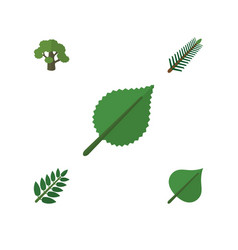 Flat icon natural set of linden tree hickory and vector