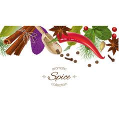 spice horizontal border vector image