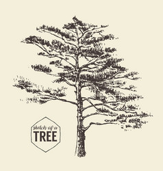 pine tree vintage drawn sketch vector image