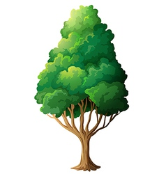 A tall old tree vector