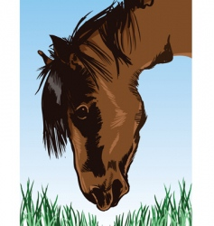 horse feeding on grass illustration vector image