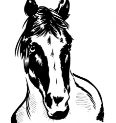 wild horse portrait illustration vector image