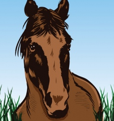 wild horse portrait illustration vector image