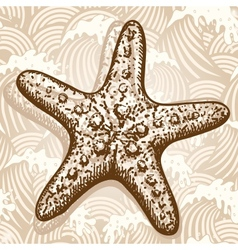 Sea star vector