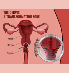 Cervical screening image vector