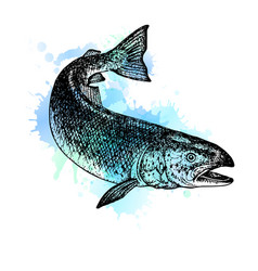 watercolor hand drawn salmon sketch vector image
